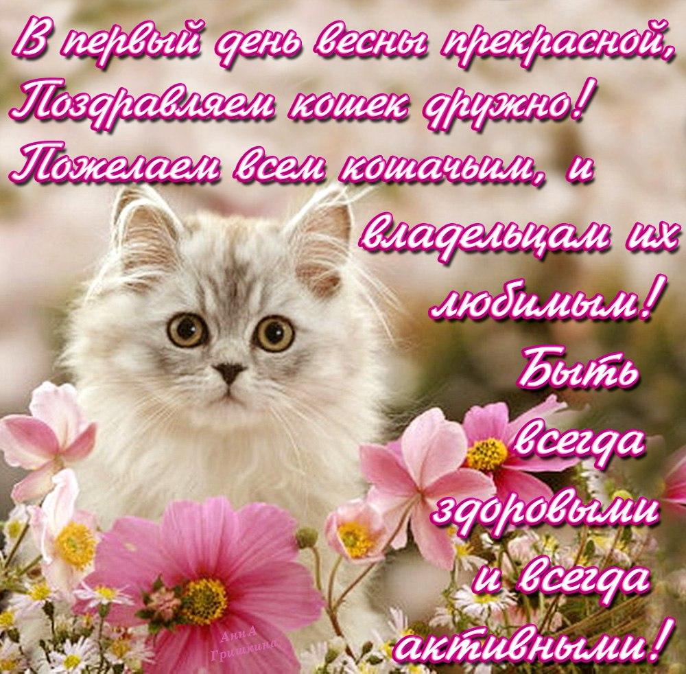 Кошки поздравления с днем